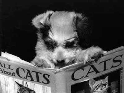 dog-reading-cat-book